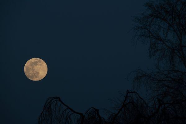 lune5-6-7-avril2020-4A9B4B819-E611-0723-EFBE-AE0084EDC832.jpg